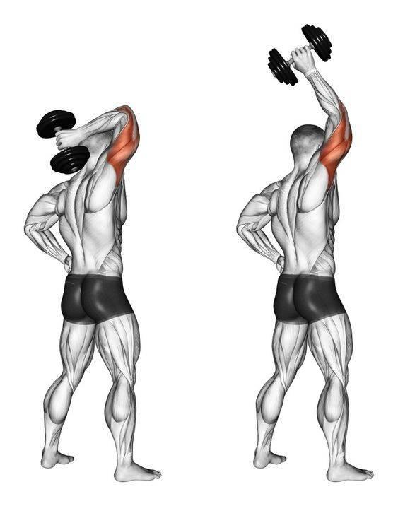 Упражнения на трицепс с гантелями - эффективные комплексы тренировок для мужчин и женщин