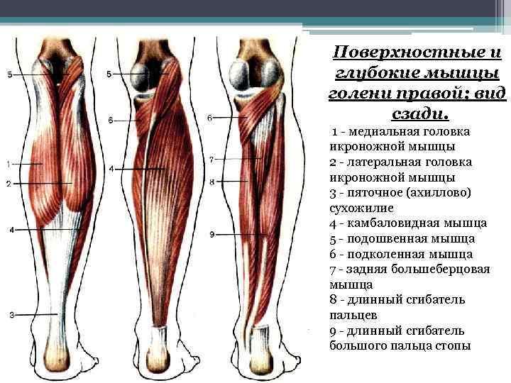 Анатомия стопы и голеностопного сустава
