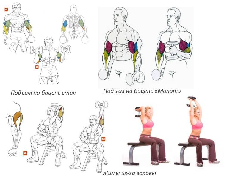 Тренировка мышц рук: супер убойная программа   бомба тело