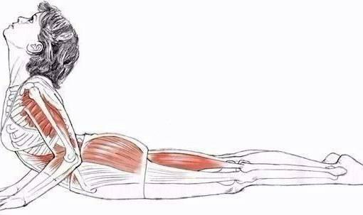 Растяжка пресса: 7 упражнений чтобы растянуть мышцы живота