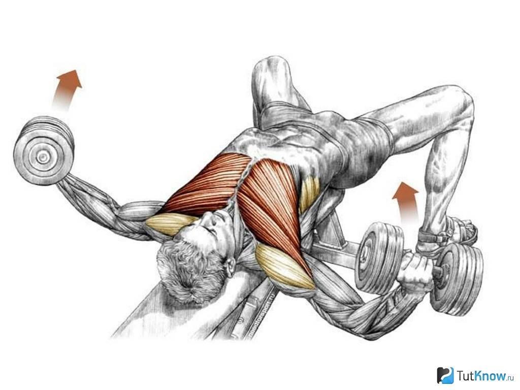Как правильно выполнять жим гантелей в наклоне для формирования шикарной груди?