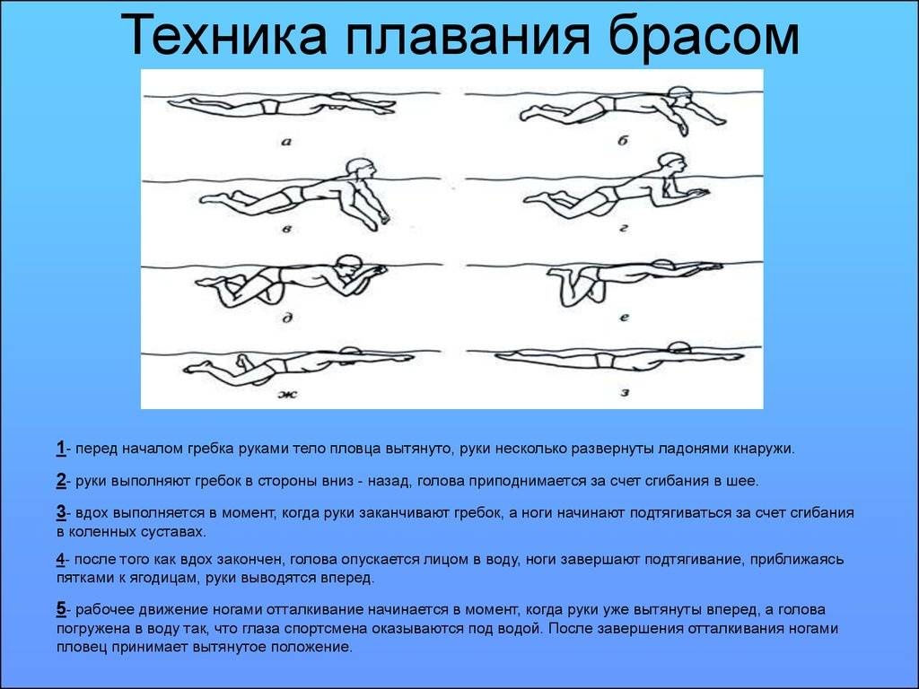 Упражнения для брасса на суше: растяжка и сила для плавания, сухой вариант для прокачивания мышц, связок и техники!
