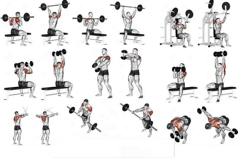Лучшие упражнения на плечи: программа тренировочного дня
