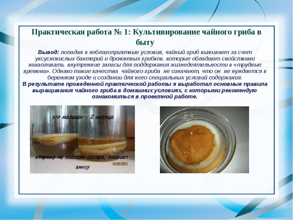 Полезные свойства чайного гриба преувеличены