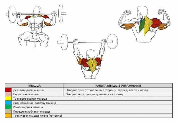 Армейский жим стоя и сидя: техника, варианты выполнения, важные нюансы и рекомендации | rulebody.ru — правила тела