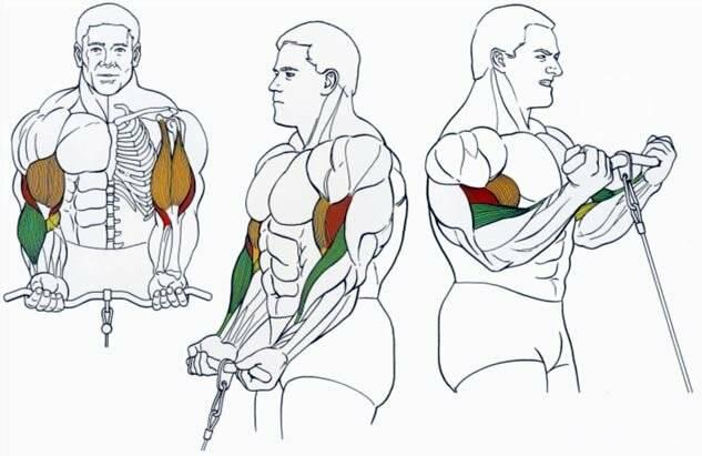 Упражнение пуловер для спины. техника в кроссовере, блоке с гантелями, штангой стоя, лежа