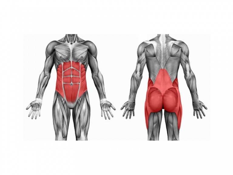 Мышцы кора упражнения для мужчин и женщин в домашних условиях