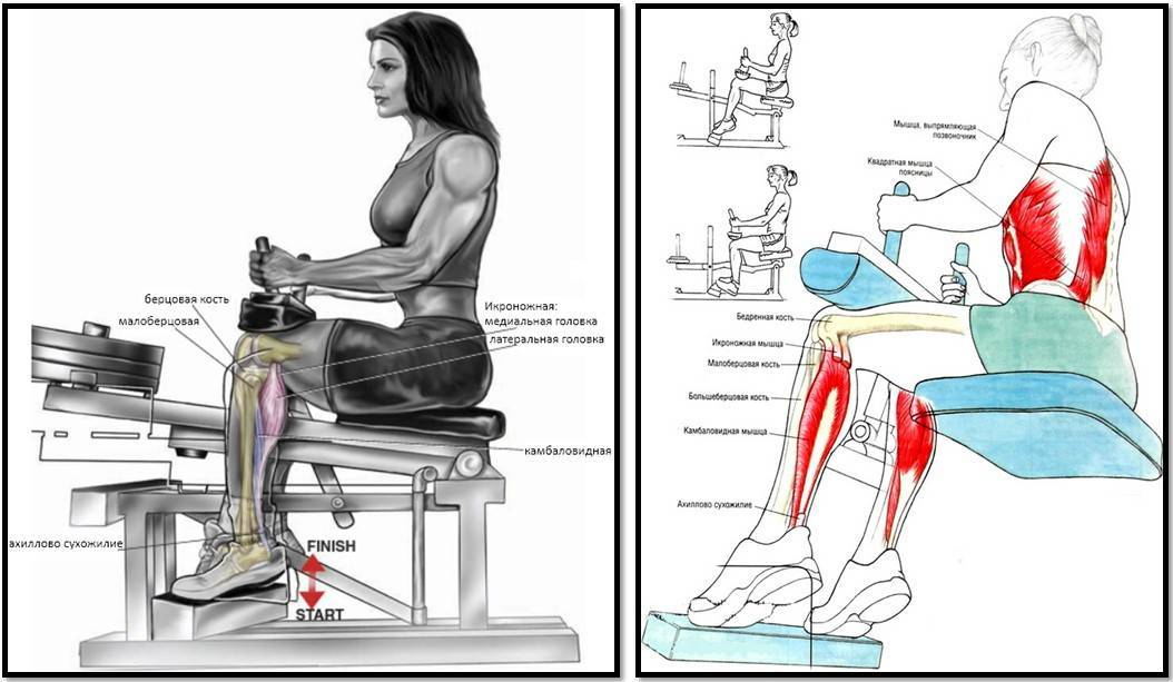 Как накачать икры ног девушке быстро: лучшие упражнения дома