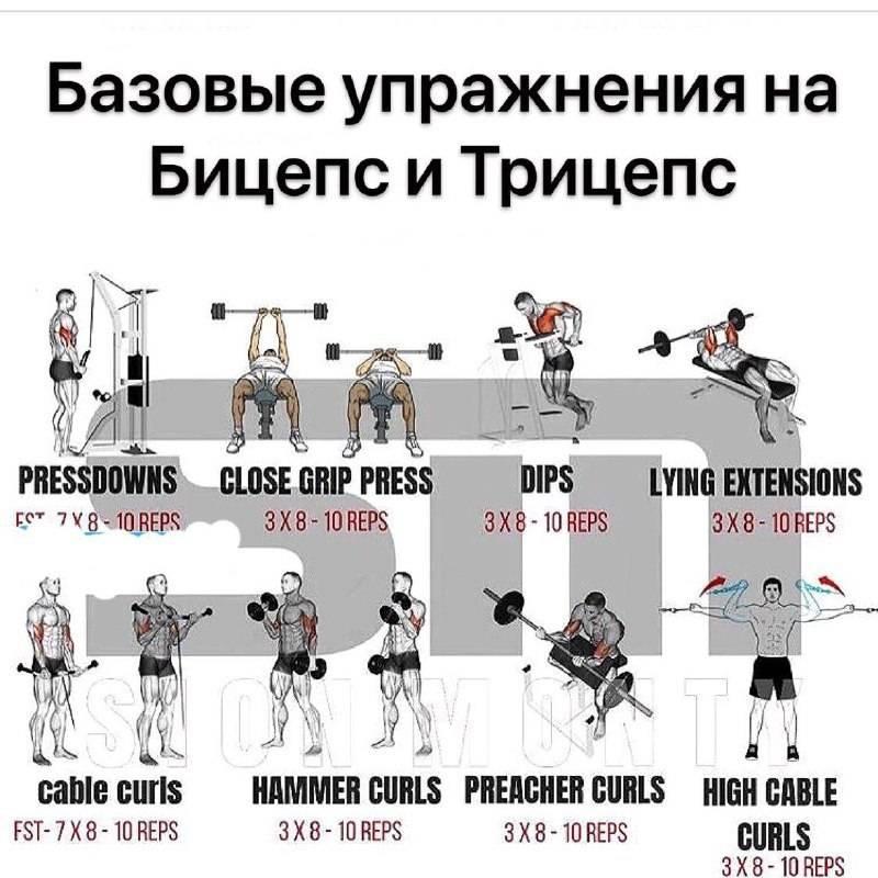 Как часто нужно тренироваться в зале для роста мышечной массы?