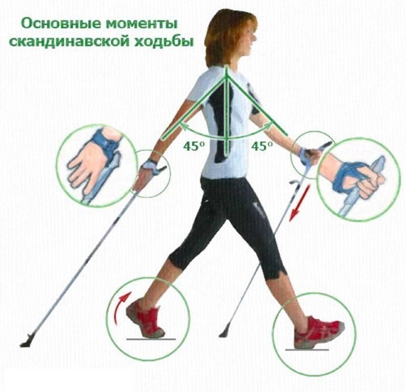 Скандинавская ходьба в москве и м. о.  |  sport365