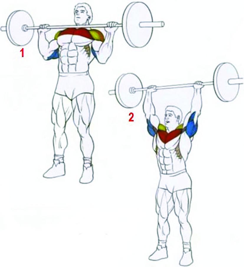 Жим штанги стоя с груди: техника, фото и видео