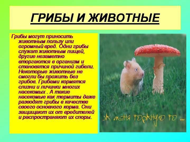 Сколько перевариваются грибы в организме человека? - инфекции стоп