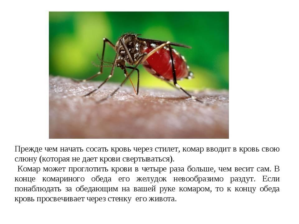Ученые выяснили, какая группа крови самая привлекательная для комаров