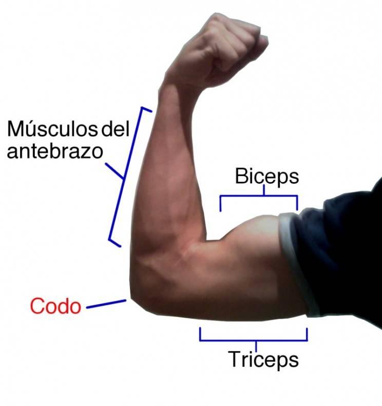 Суперсет на бицепс и трицепс. программа | musclefit
