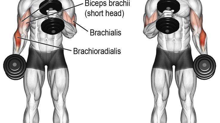 Как накачать брахиалис гантелями на турнике, упражнения на брахиалис