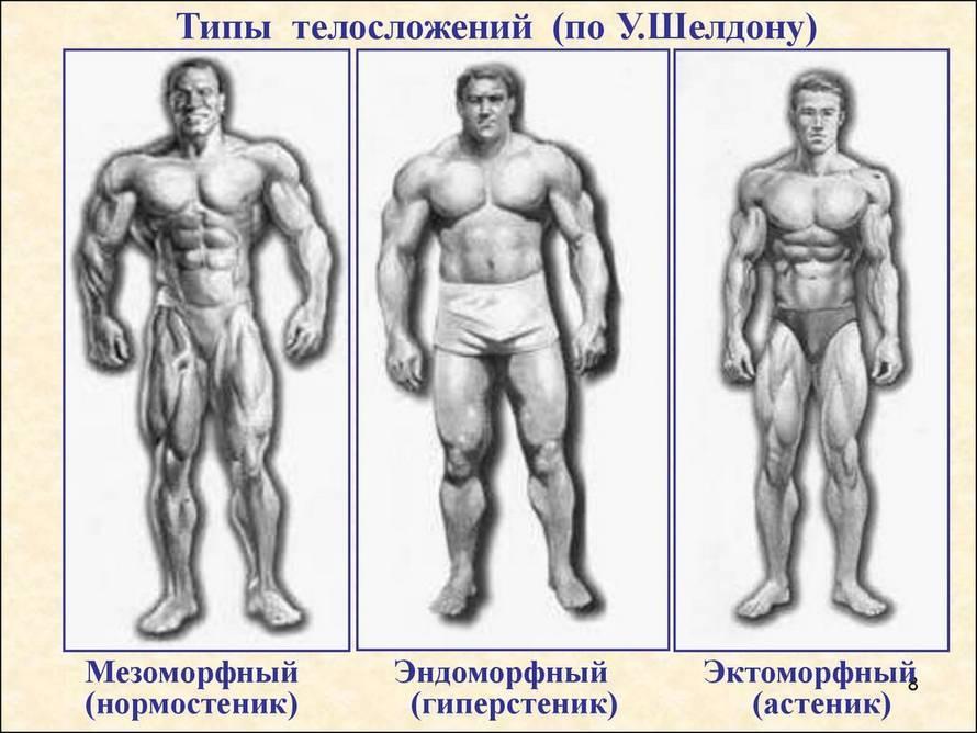 Эндоморф: основные характеристики и особенности тренинга