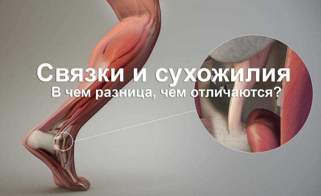 5 секретов восстановления хрящевой ткани в колене