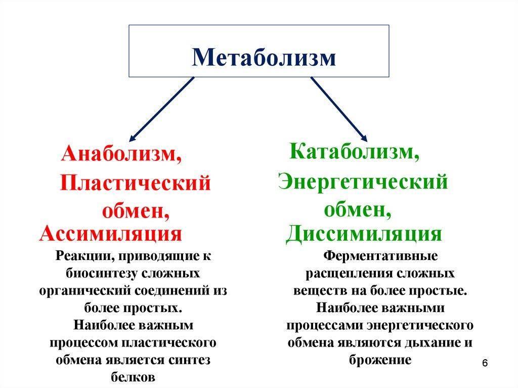 Что такое катаболизм и анаболизм. анаболизм катаболизм = метаболизм.