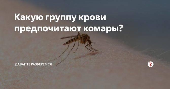Кто тут самый вкусный? людей с какой группой крови комары «любят» больше   самое интересное