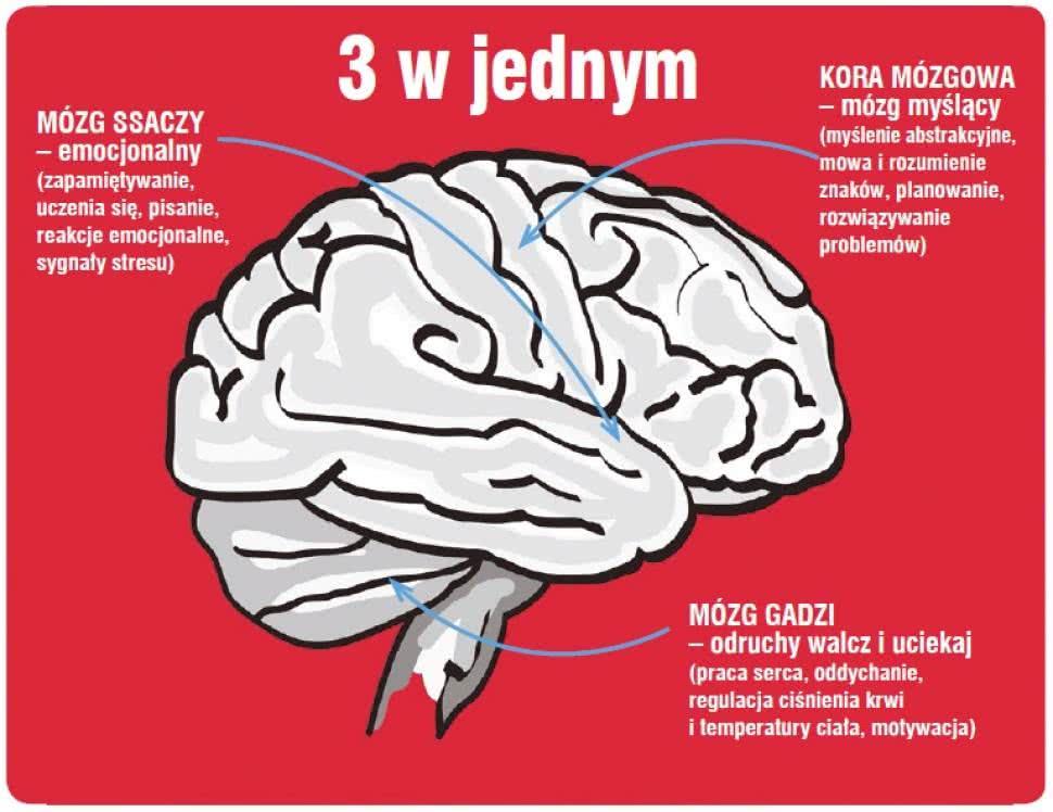 12 эзотерических упражнений подготовят тело и мозг для работы