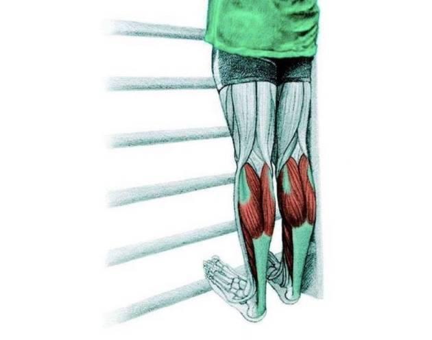 Комплекс упражнений для восстановления движений в голеностопном суставе. комплекс базовых упражнений для укрепления голеностопа