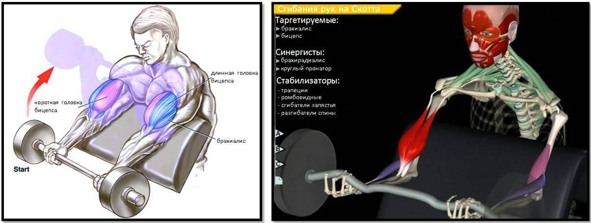 Паучьи сгибания – одно из самых недооцененных и необычных движений для бицепса