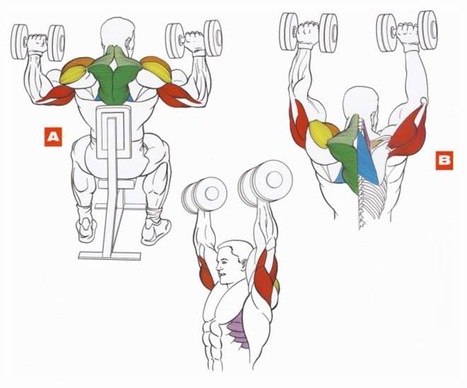 Упражнения на плечи в домашних условиях: для накачки и с гантелями