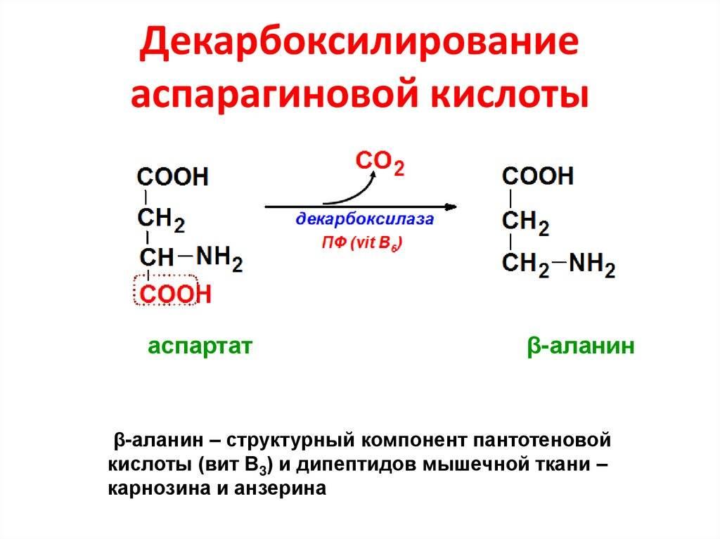 Аспарагиновая кислота + продукты богатые аспарагиновой кислотой