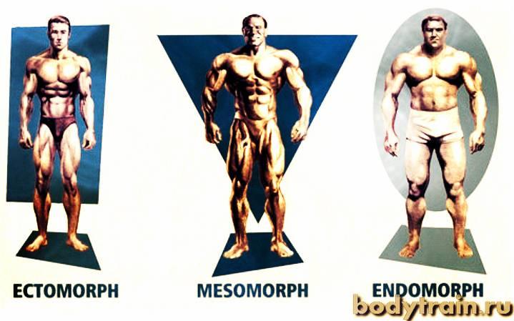 Телосложение — википедия. что такое телосложение
