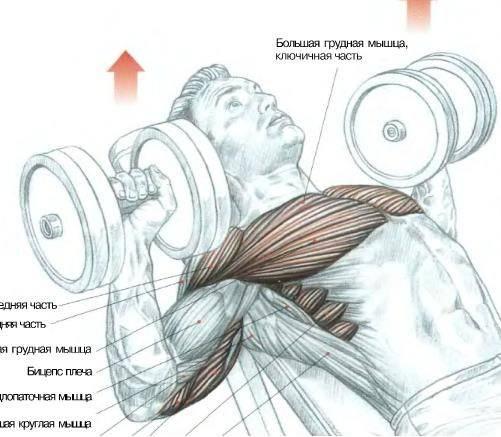 Упражнения на грудные мышцы для мужчин. домашние упражнения для грудных мышц - kak-nakachat.pro