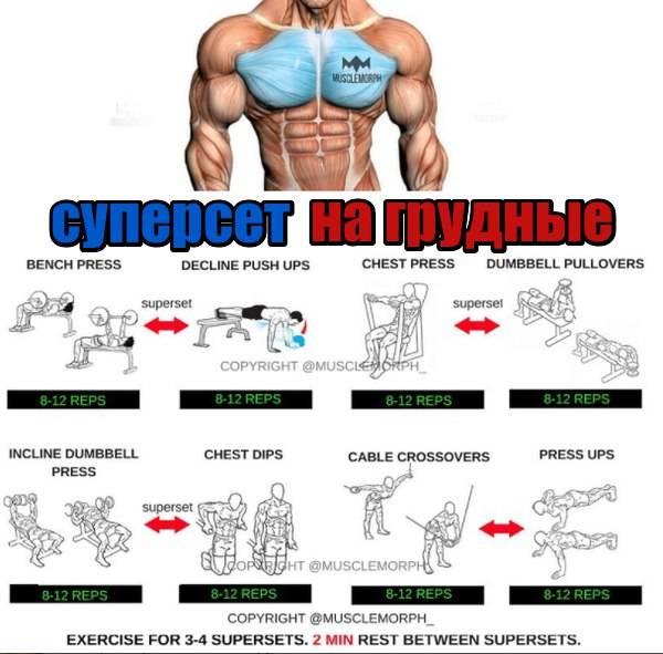 Тренировка грудь-спина в один день: программа упражнений суперсетами для новичков и продвинутых спортсменов