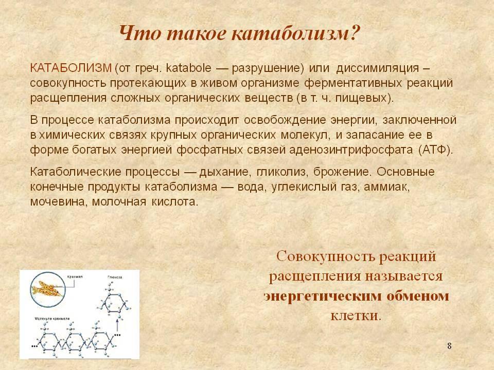Метаболизм: анаболизм + катаболизм