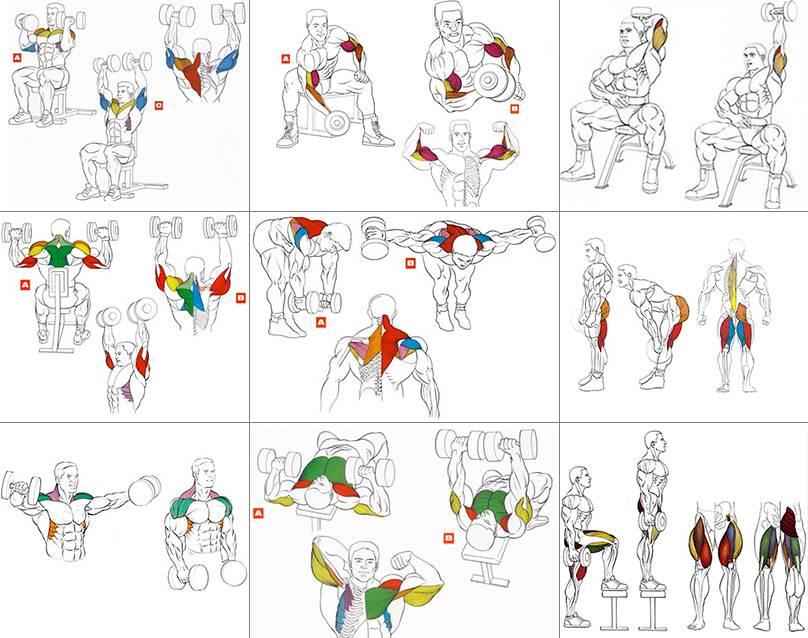 Базовые упражнения для набора мышечной массы и программа тренировок на массу