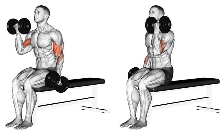 Базовые и изолирующие упражнения для мышц рук