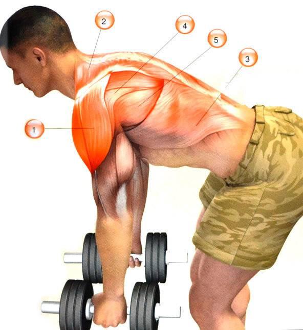 Лучшие упражнения на заднюю дельту— округли свои плечи