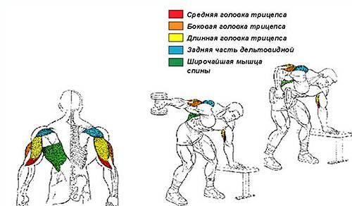 Разгибание рук с гантелями в наклоне: эффективное упражнение на трицепс | irksportmol.ru