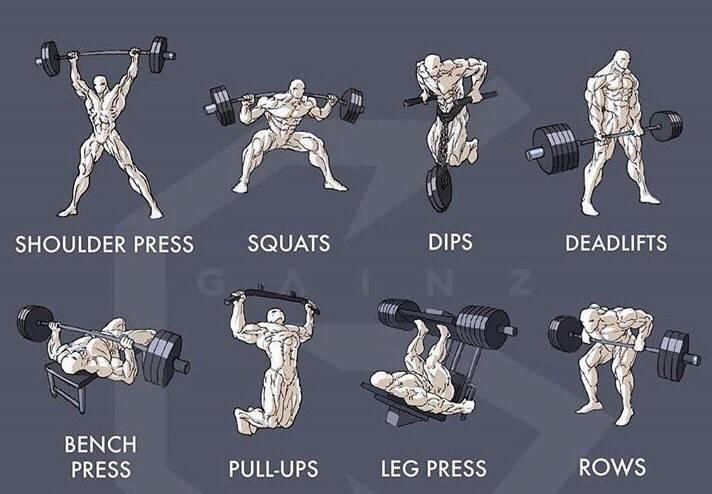 Программа тренировок для набора мышечной массы - 5 лучших схем