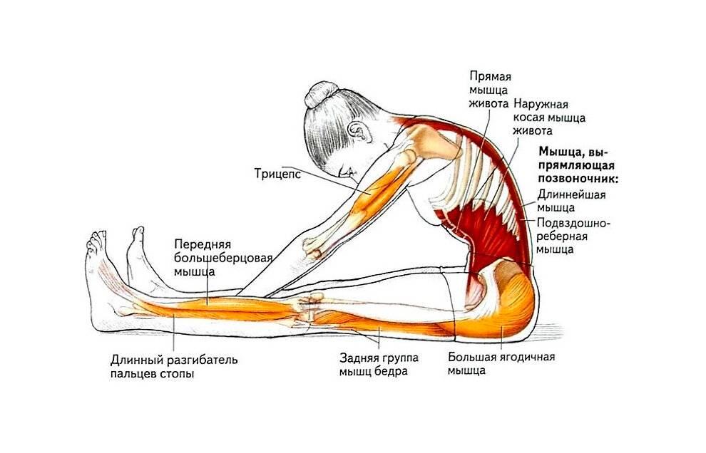 Толчок штанги: техника выполнения, как увеличить показатели, какие мышцы работают