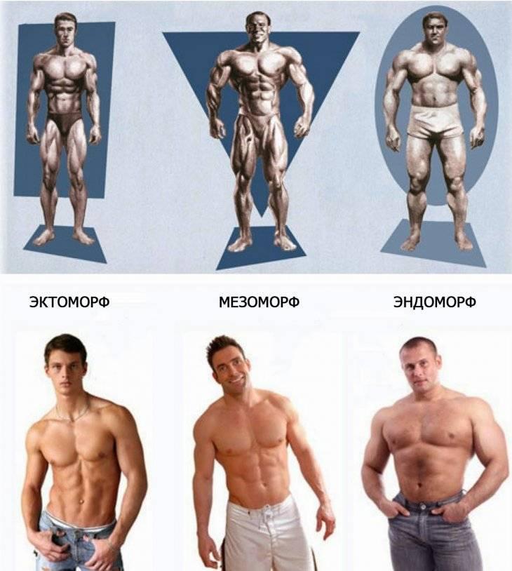 Программы тренировок для эндоморфа на похудение, рельеф и массу   rulebody.ru — правила тела