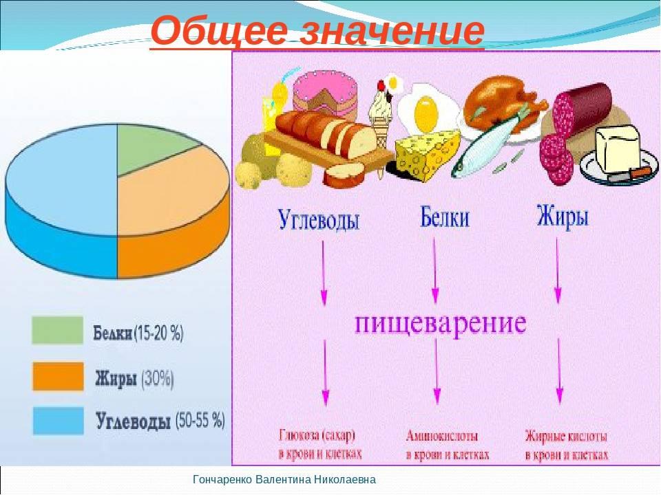 Лекция № 10. значение белков и жиров в питании человека. общая гигиена: конспект лекций