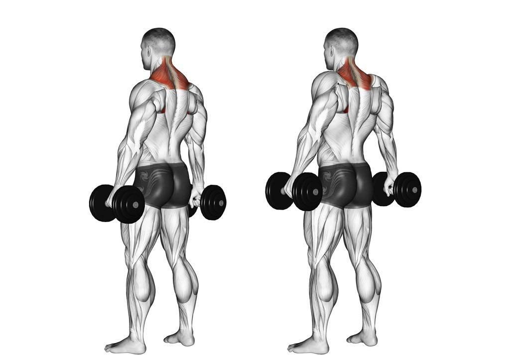 Шраги с гантелями стоя или сидя: техника выполнения в деталях