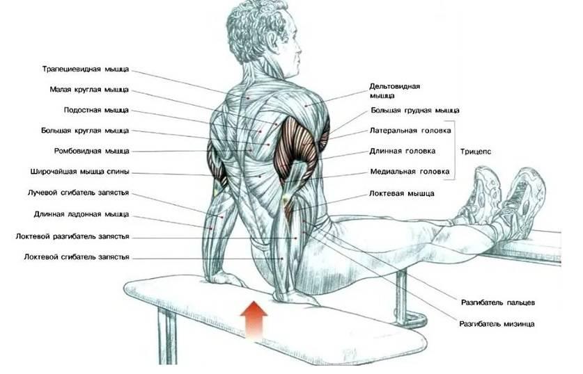 Как накачать мышцы в домашних условиях