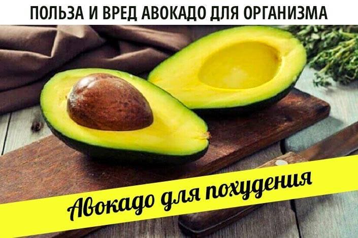 12 доказанных полезных свойств авокадо для организма