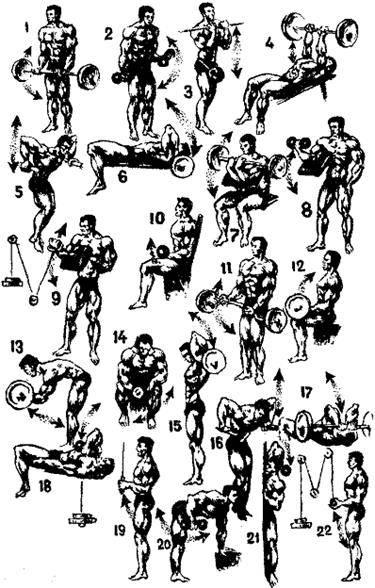 Упражнения для рук с гантелями (для женщин)