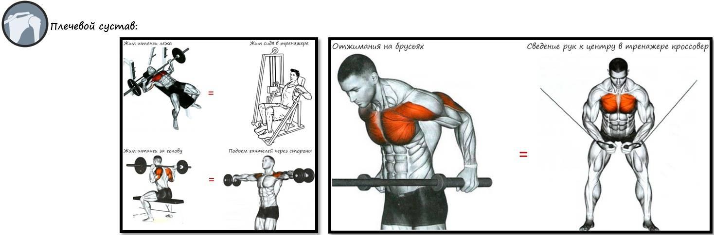 Как накачать спину и плечи: лучший комплекс упражнений