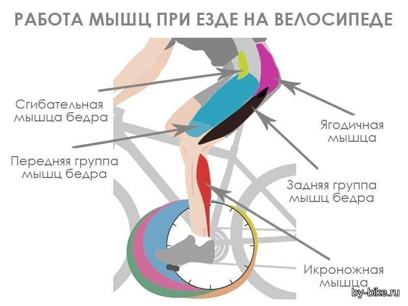 Упражнение велосипед: польза и вред, какие мышцы работают, как делать