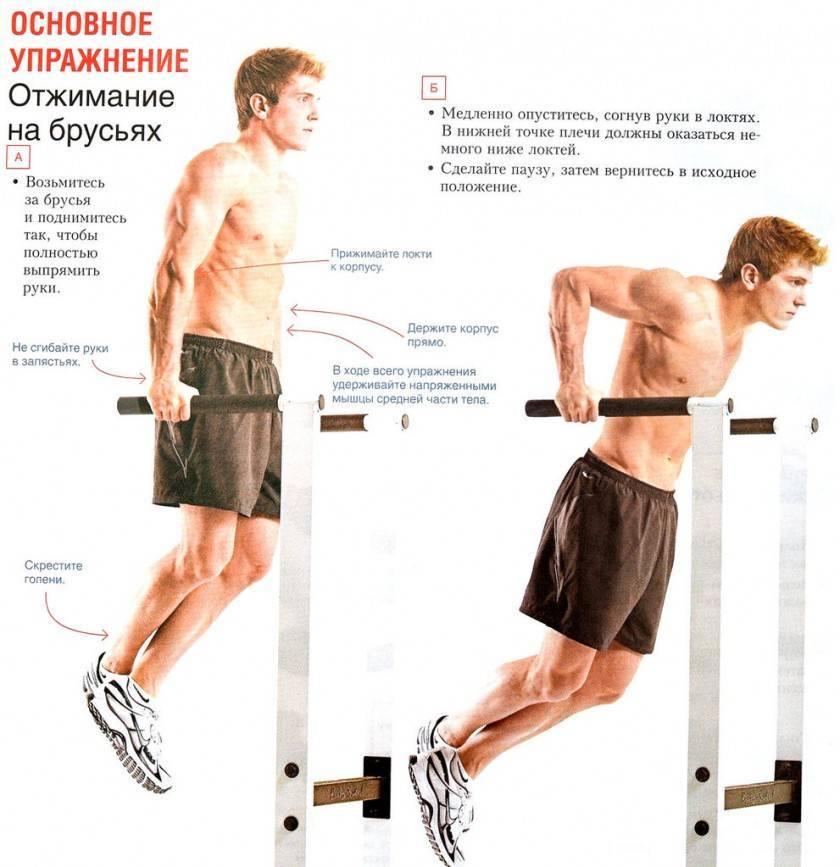 Отжимания широким хватом: как правильно делать и какие мышцы работают
