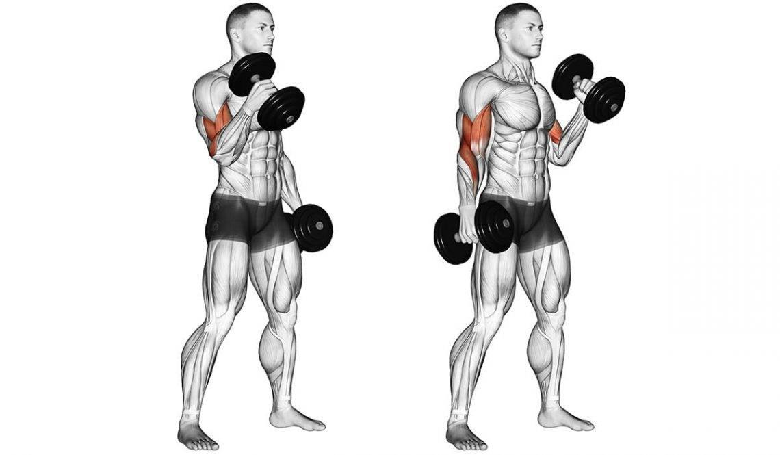 Комплексы упражнений для рук с гантелями и без снарядов