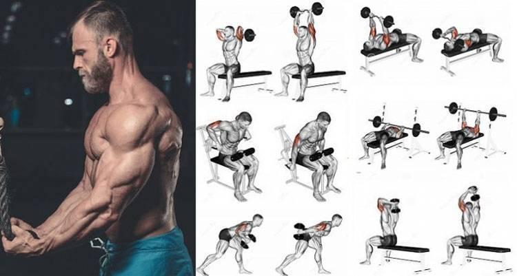 5 лучших базовых и изолирующих упражнений на бицепс