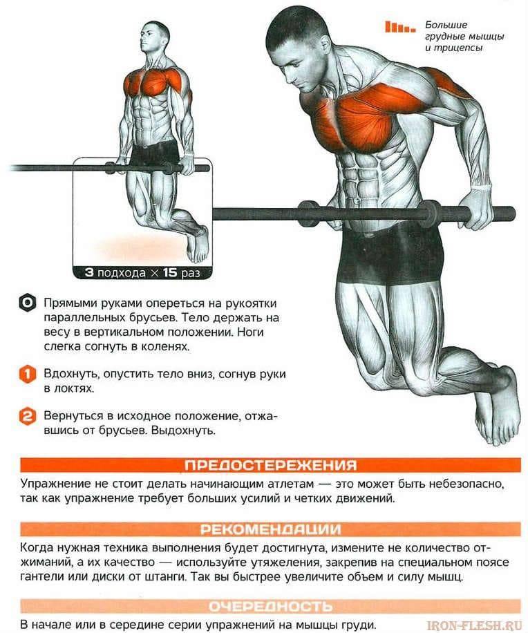 Упражнения на грудные мышцы с собственным весом